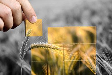 La Mondialisation et la sécurité alimentaire